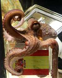 octopus love's spain (getty images)